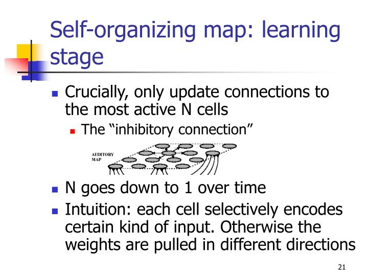 Self-organizing map: learning stage