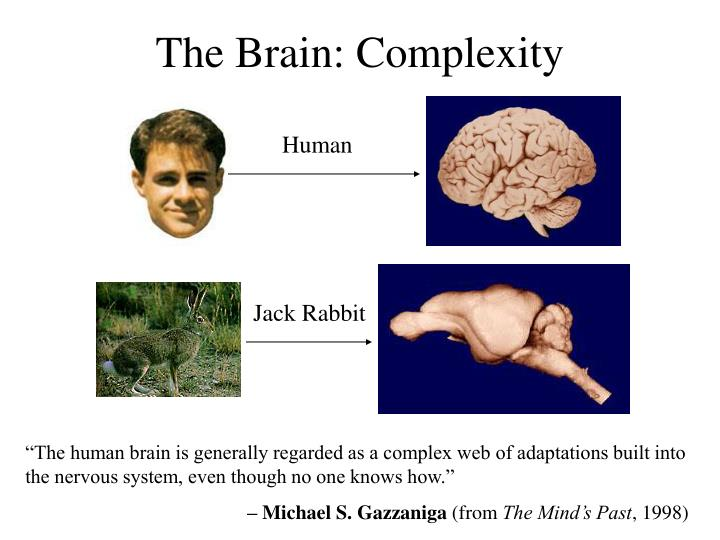The Brain: Complexity