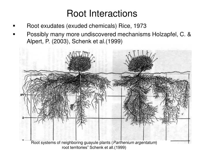 Root Interactions
