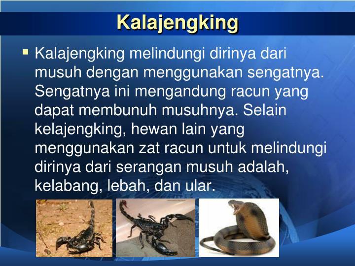 Kalajengking