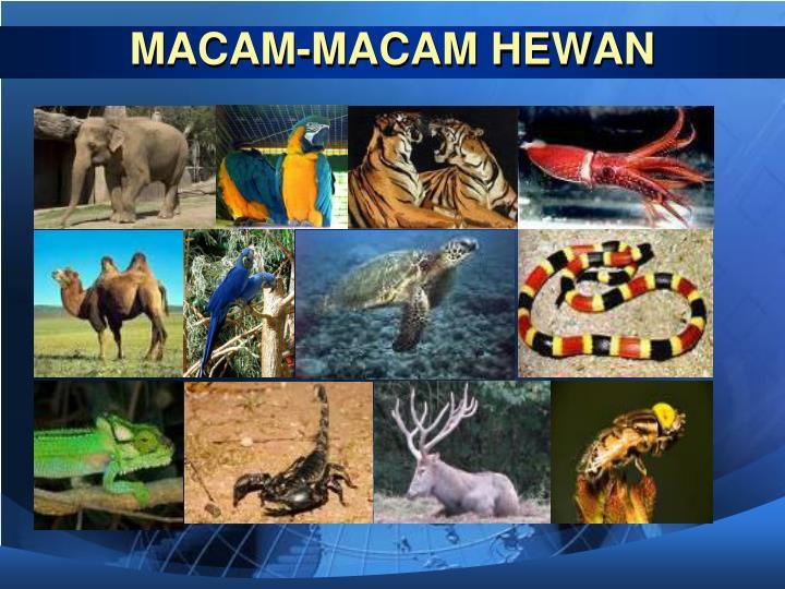 MACAM-MACAM HEWAN