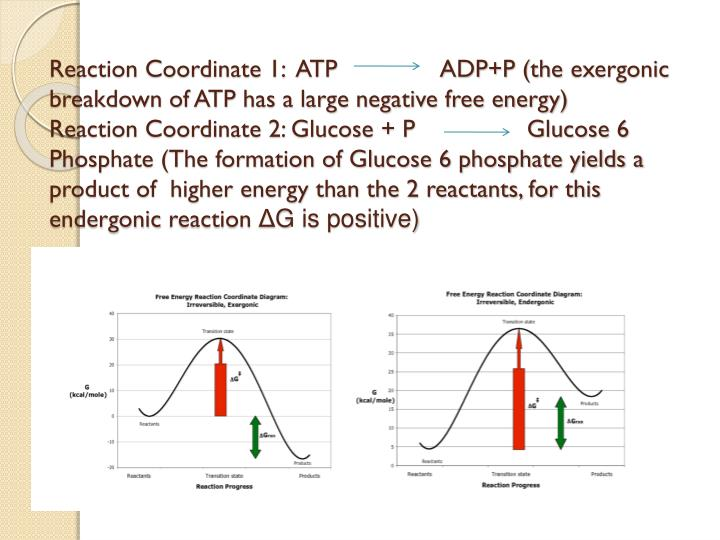 Reaction Coordinate 1:  ATP               ADP+P (the