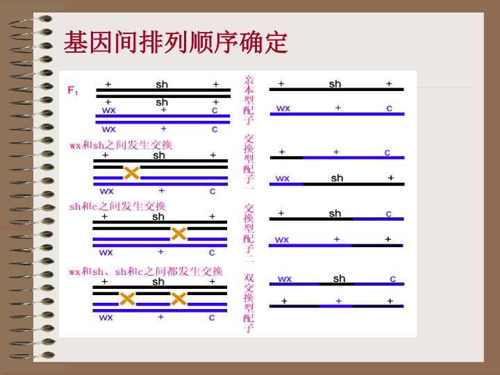 基因间排列顺序确定