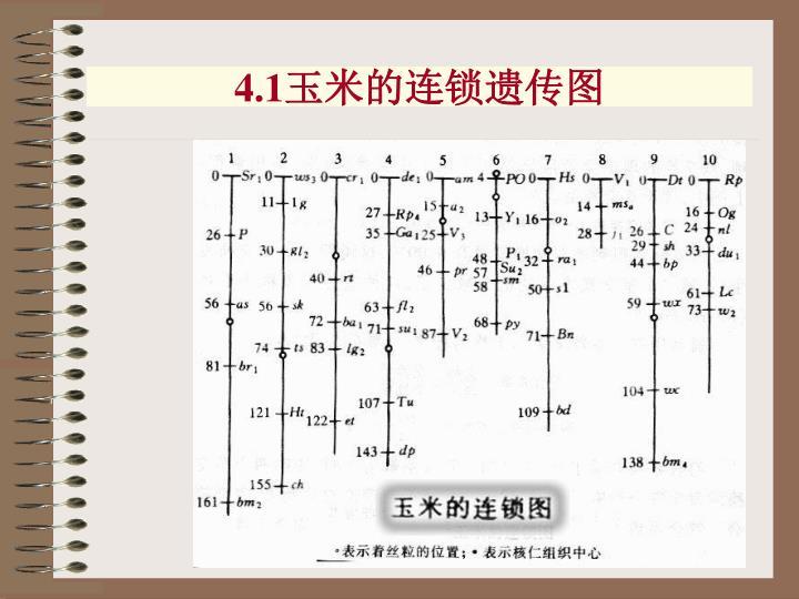 4.1玉米的连锁遗传图