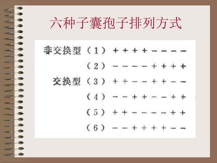 六种子囊孢子排列方式
