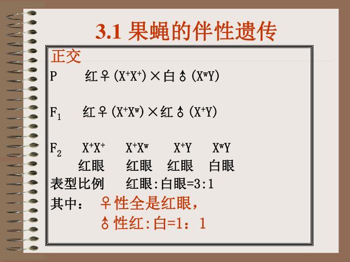 3.1 果蝇的伴性遗传