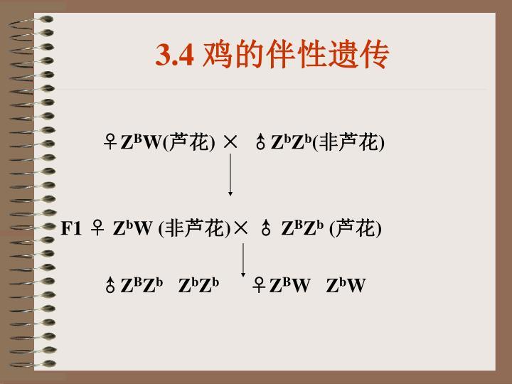 3.4 鸡的伴性遗传