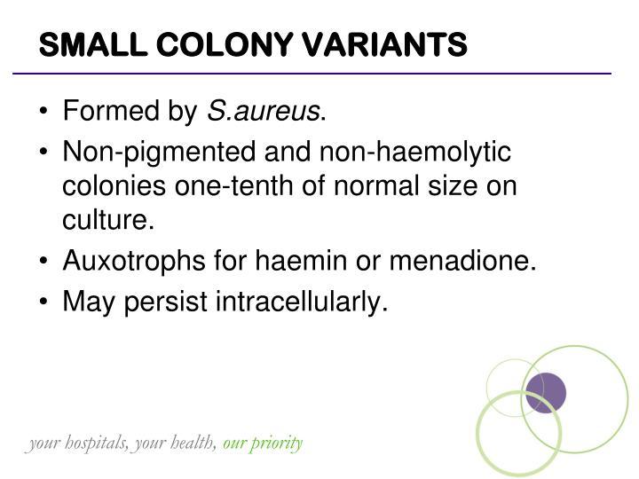 SMALL COLONY VARIANTS