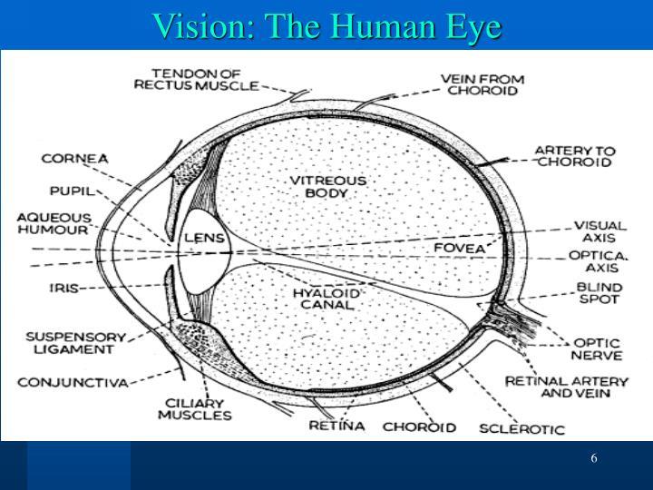 Vision: The Human Eye