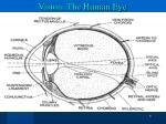 vision the human eye