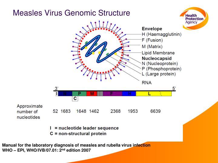 Measles Virus Genomic Structure