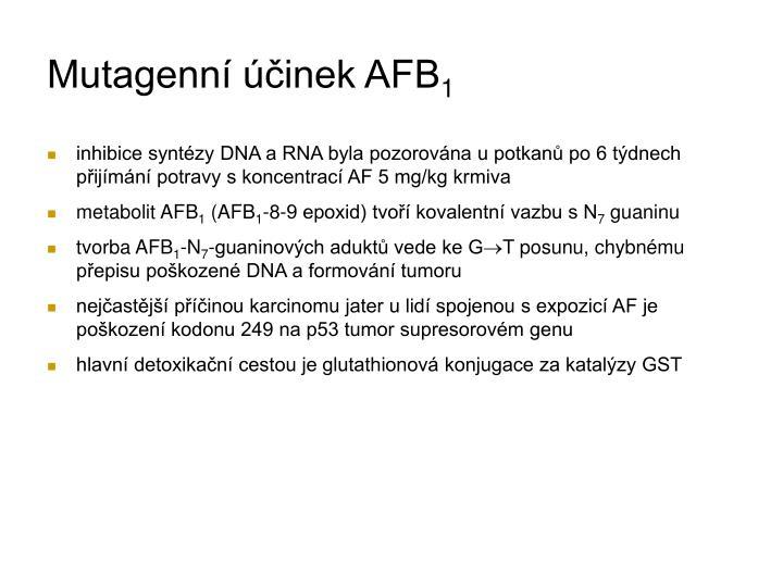 Mutagenní účinek AFB
