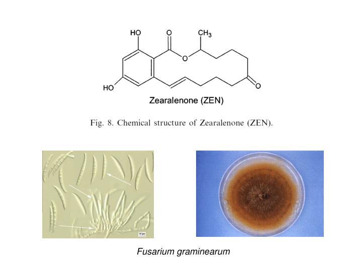Fusarium graminearum
