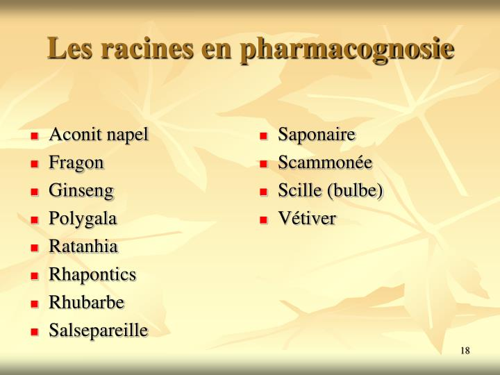 Les racines en pharmacognosie