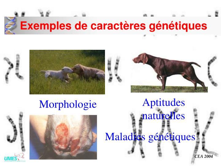 Exemples de caractères génétiques