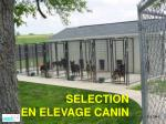 selection en elevage canin
