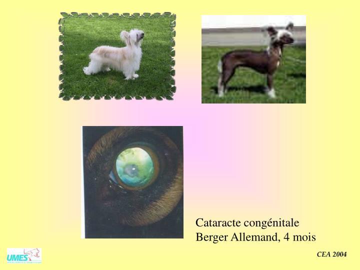 Cataracte congénitale