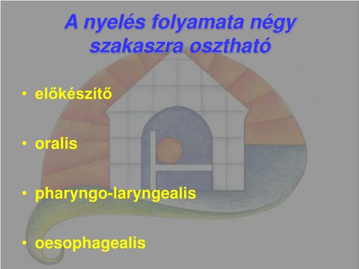 A nyelés folyamata négy szakaszra osztható