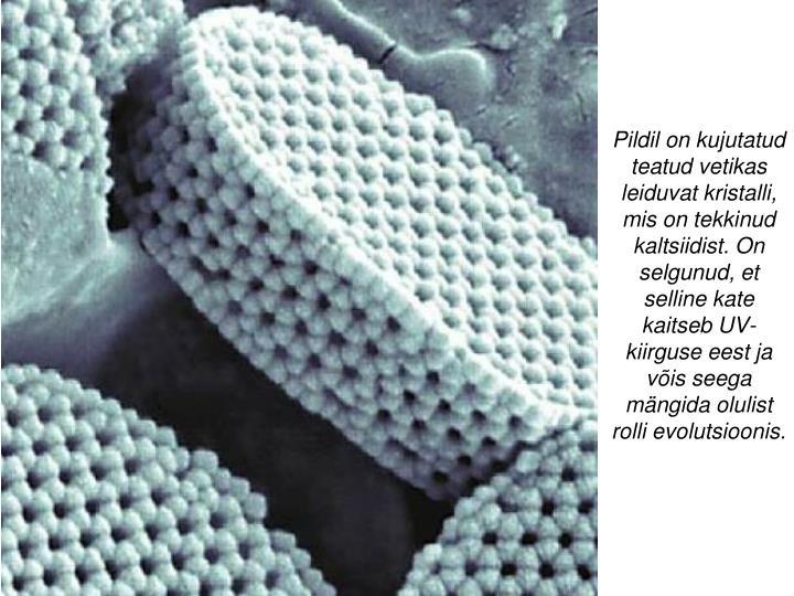 Pildil on kujutatud teatud vetikas leiduvat kristalli, mis on tekkinud kaltsiidist. On selgunud, et selline kate kaitseb UV-kiirguse eest ja võis seega mängida olulist rolli evolutsioonis.