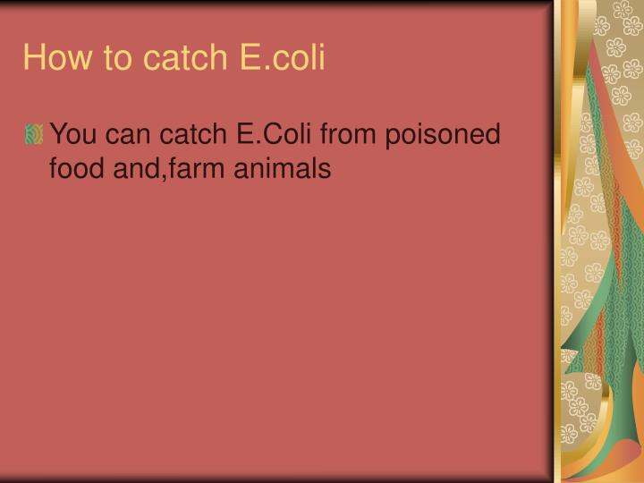 How to catch E.coli