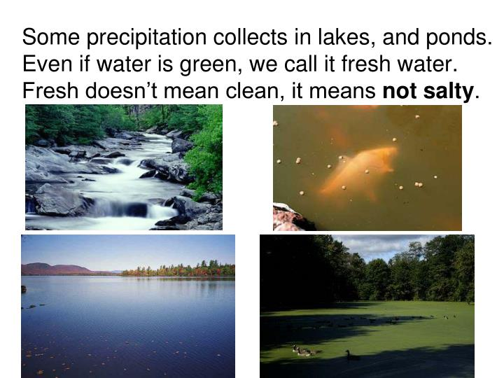 Some precipitation collects in lakes, and ponds.  Even if water is green, we call it fresh water. Fresh doesn't mean clean, it means