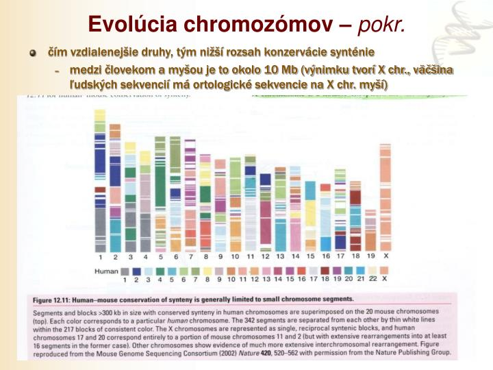 Evolúcia chromozómov –