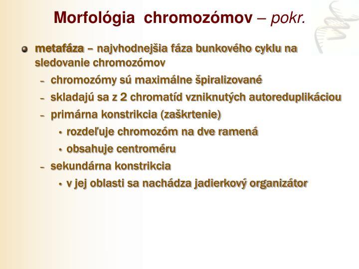 Morfológia  chromozómov