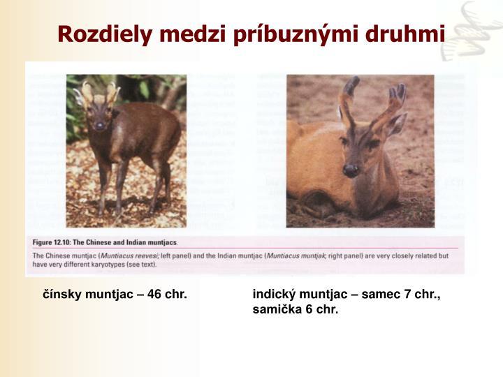Rozdiely medzi príbuznými druhmi