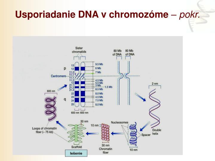 Usporiadanie DNA v chromozóme