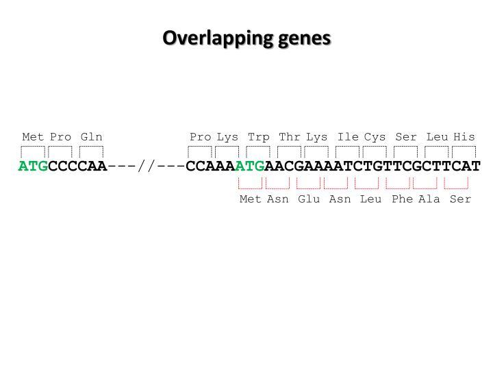 Overlapping genes