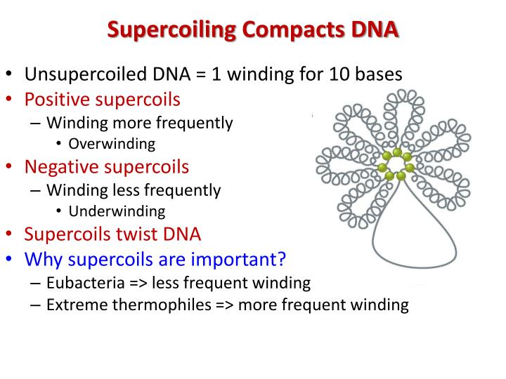 Unsupercoiled