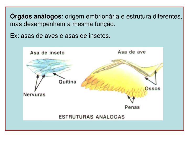Órgãos análogos
