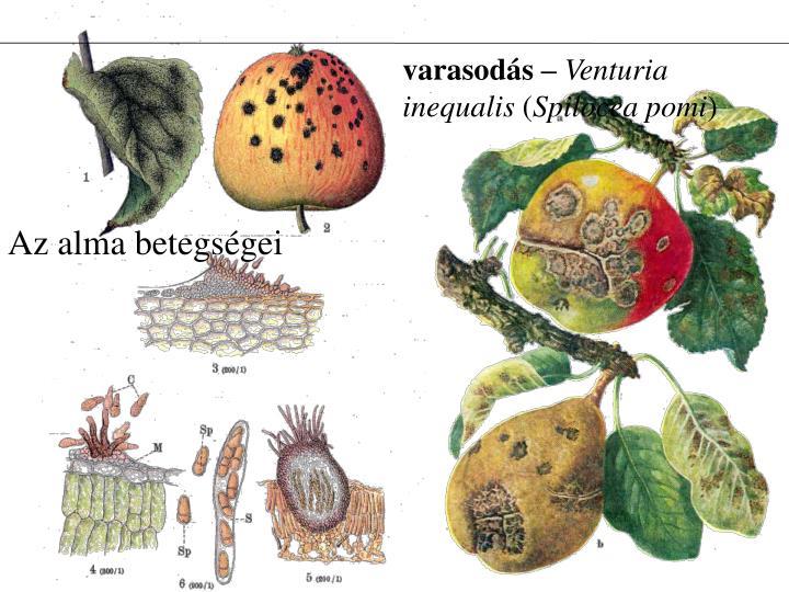 Az alma betegségei