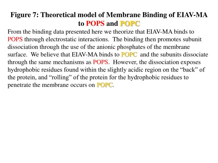 Figure 7: Theoretical model of Membrane Binding of EIAV-MA to