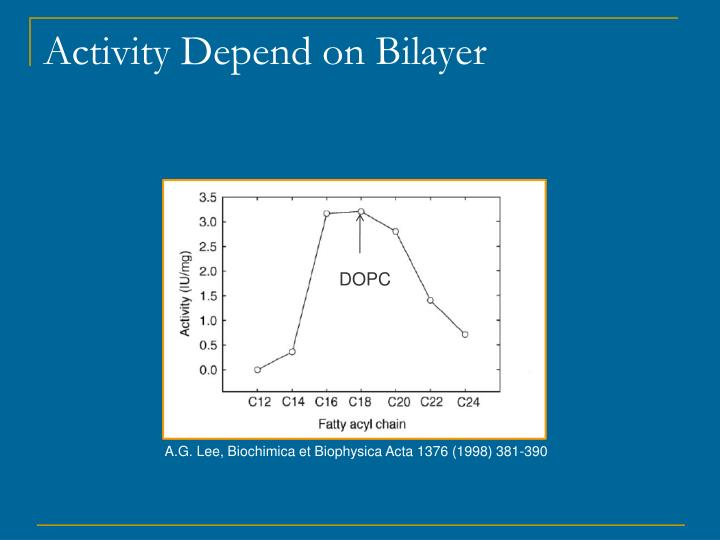 Activity Depend on Bilayer