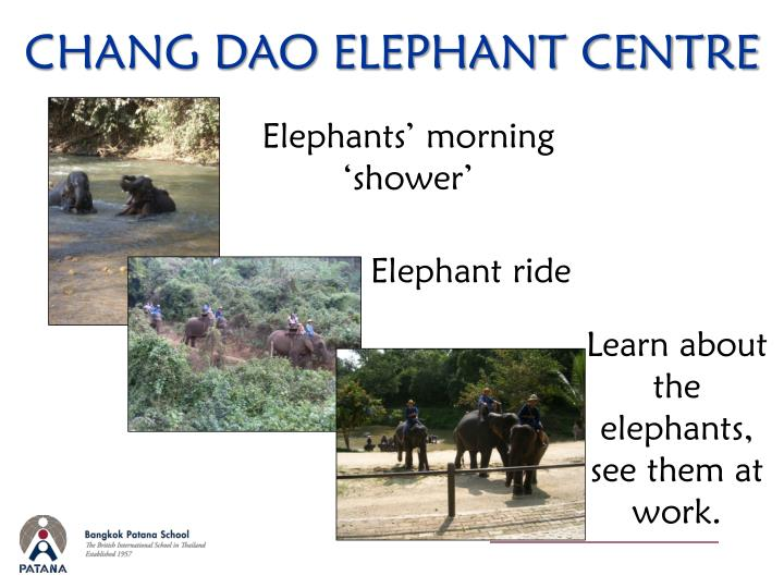CHANG DAO ELEPHANT CENTRE