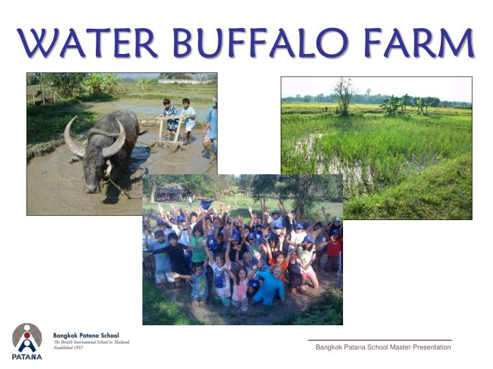 WATER BUFFALO FARM