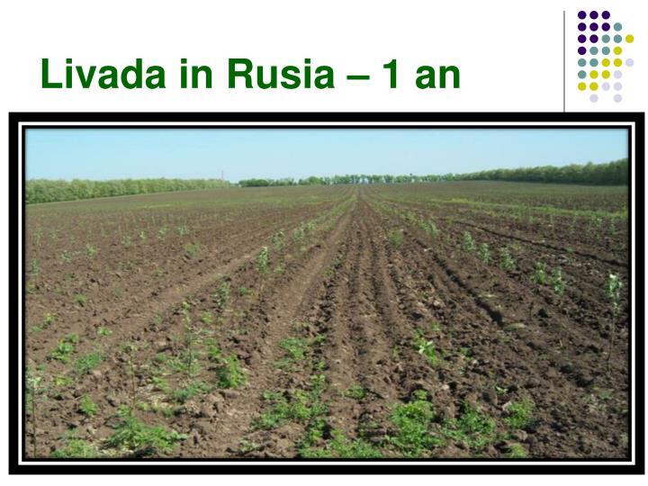 Livada in Rusia – 1 an