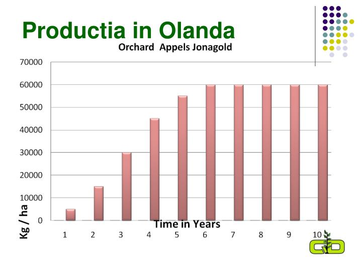 Productia in Olanda