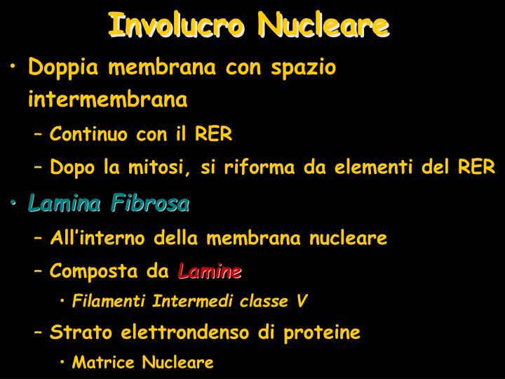 Involucro Nucleare