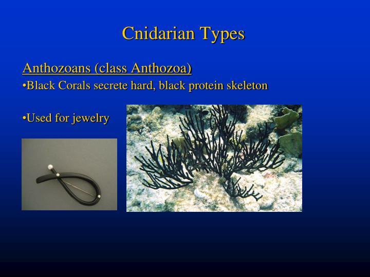 Cnidarian Types