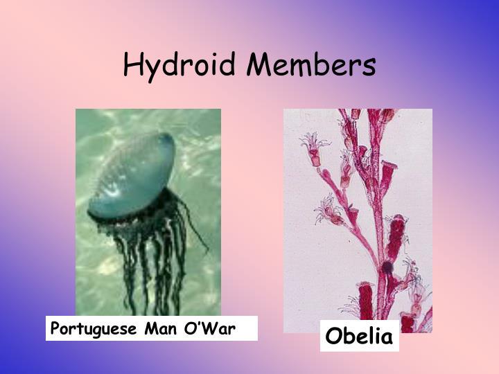 Hydroid Members