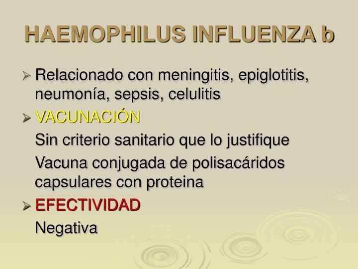 HAEMOPHILUS INFLUENZA b