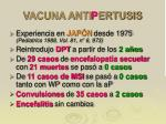 vacuna anti p ertusis3