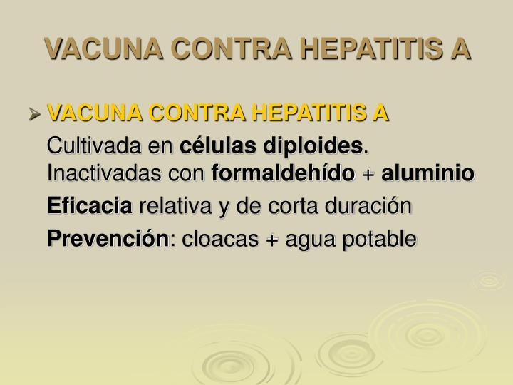 VACUNA CONTRA HEPATITIS A