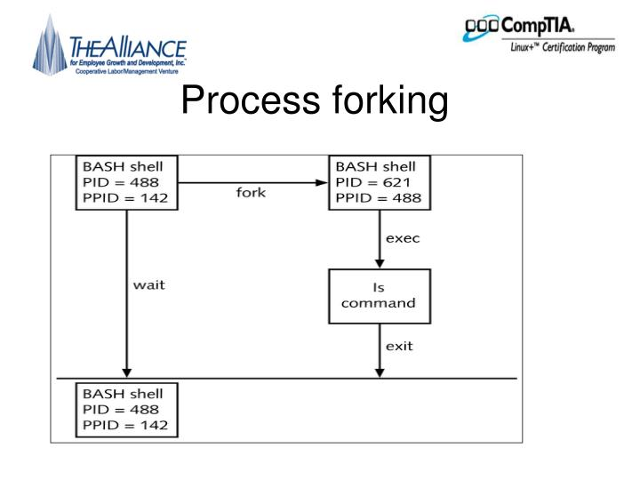 Process forking