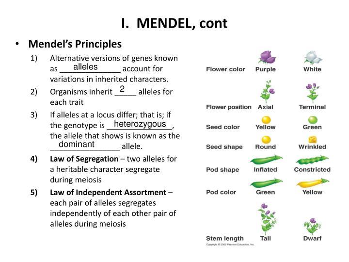 I.  MENDEL, cont