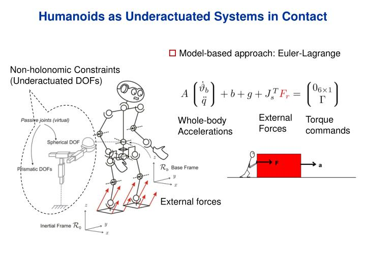 Humanoids as Underactuated Systems in Contact