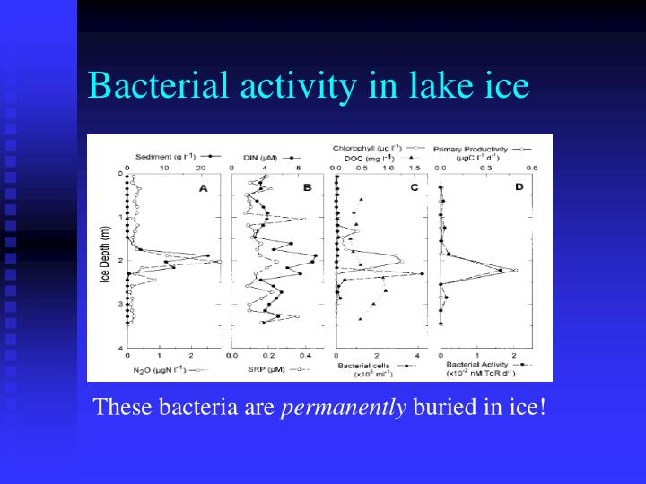 Bacterial activity in lake ice