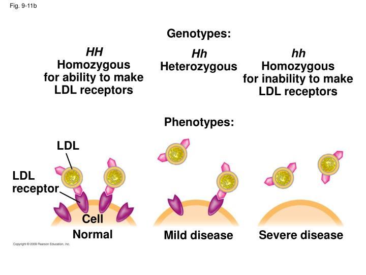 Genotypes: